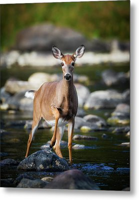 Who Goes There Metal Print by Bill Wakeley