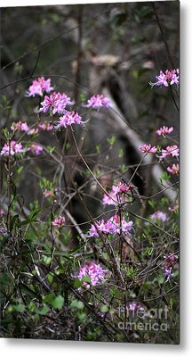 Metal Print featuring the photograph Who Put The Wild In Wildflowers by Skip Willits