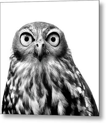 Whoo You Callin A Wise Guy Metal Print