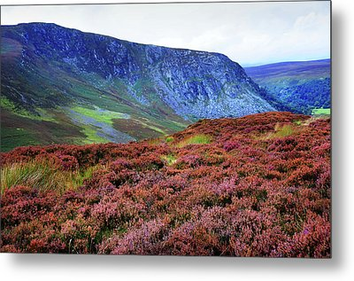 Metal Print featuring the photograph Wicklow Heather Carpet by Jenny Rainbow