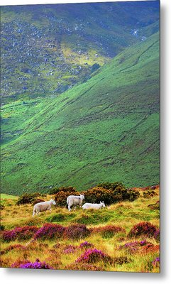 Metal Print featuring the photograph Wicklow Pastoral by Jenny Rainbow
