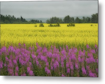 Wild And Colourful - Couleurs Sauvages  Metal Print