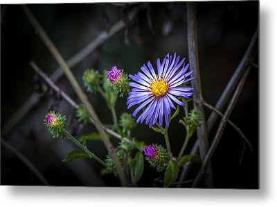 Wild Beauty Metal Print by Marvin Spates