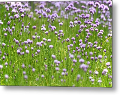 Wild Chives Metal Print by Chevy Fleet