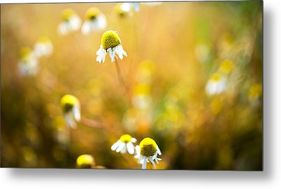 Wild Daisy Illusions Metal Print by Ron Day