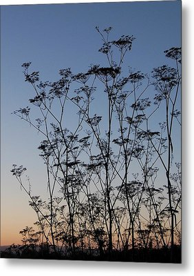 Wild Dill Silhouette Metal Print by Jean Booth