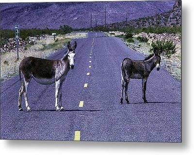 Wild Donkeys On Road To Oatman Metal Print by Garry Gay