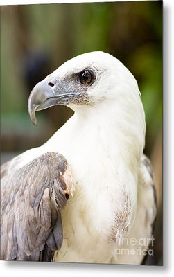 Metal Print featuring the photograph Wild Eagle by Jorgo Photography - Wall Art Gallery