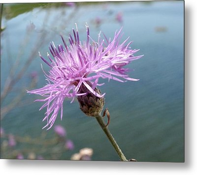 Wild Flower By The Lake Metal Print by Martha Ayotte