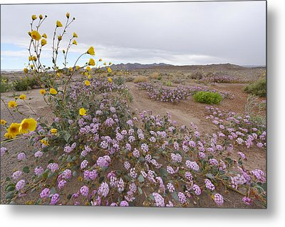 Metal Print featuring the photograph Wild Flowers In Death Valley by Dung Ma