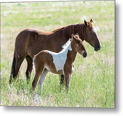 Metal Print featuring the photograph Wild Foal With A Horse Pattern  by Mary Hone