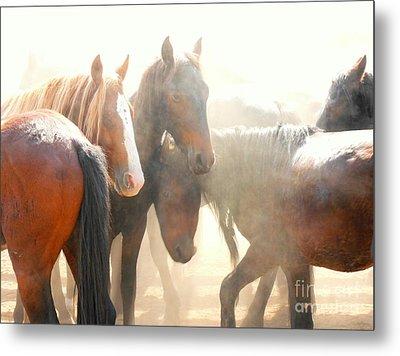 Wild Horses - Australian Brumbies 2 Metal Print