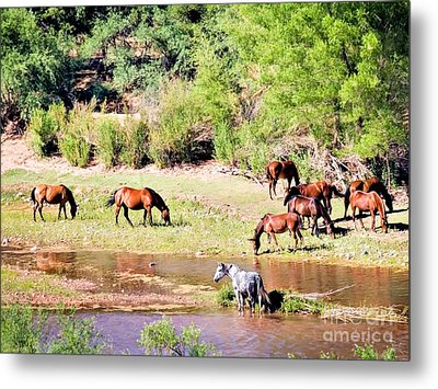 Wild Horses Grazing At Waterhole  Metal Print