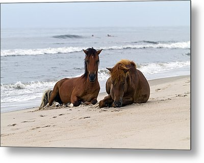 Wild Horses Of Assateague Island Metal Print by Edward Kreis