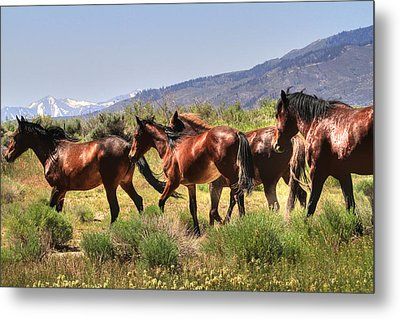 Wild Horses Of Nevada Metal Print by Donna Kennedy