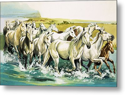 Wild Horses Of The Camargue Metal Print by English School