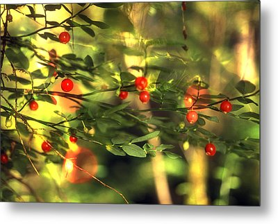 Wild Huckleberries On The Bush Metal Print by Lyle Leduc