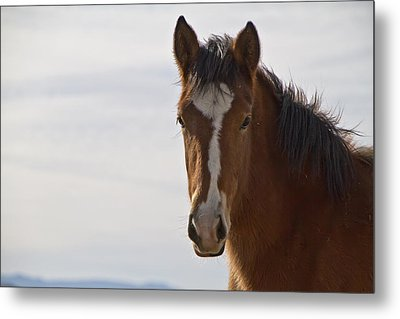 Wild Mustang Yearling Metal Print