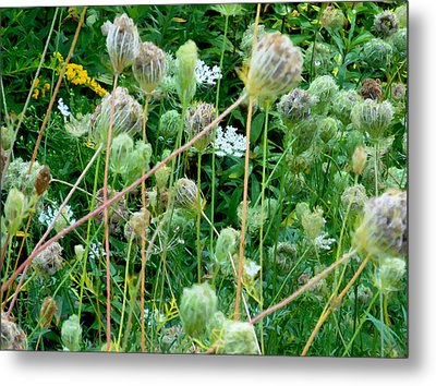 Wild Plants 6 Metal Print