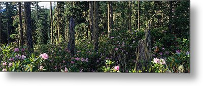Wild Rhododendrons Mount Hood National Metal Print by Panoramic Images