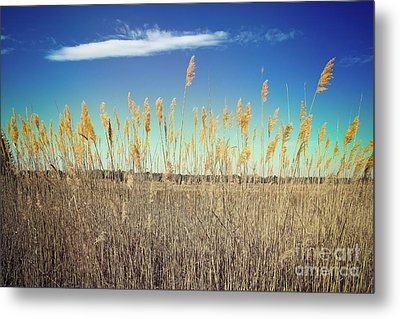 Metal Print featuring the photograph Wild Sea Oats by Colleen Kammerer