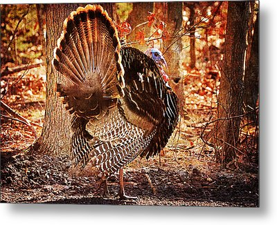 Metal Print featuring the photograph Wild Turkey by Angel Cher