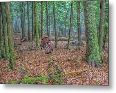Wild Turkeys In Forest Metal Print