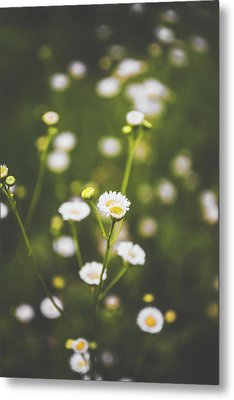 Metal Print featuring the photograph Wildflower Beauty by Shelby Young