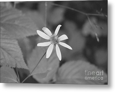 Metal Print featuring the photograph Wildflower by Eric Liller