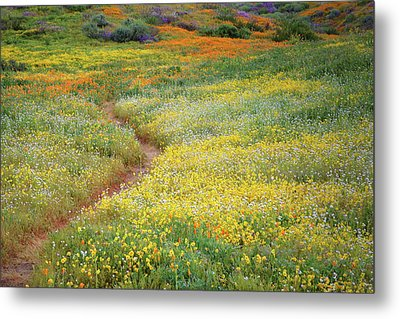 Metal Print featuring the photograph Wildflower Field Near Diamond Lake In California by Jetson Nguyen