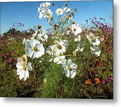 Wildflower Mania Metal Print