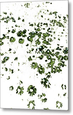 Wildflower Meadow Metal Print by Frank Tschakert