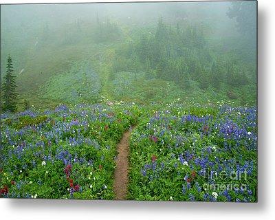 Wildflower Meadow Trail Metal Print by Mike Dawson