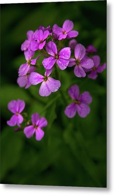 Wildflower Pallette Metal Print by Timothy McIntyre