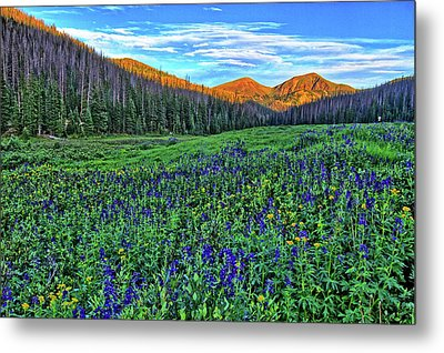 Metal Print featuring the photograph Wildflower Park by Scott Mahon