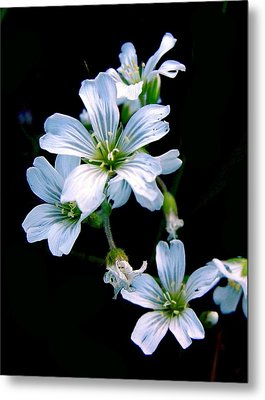 Wildflower Metal Print by Robert Knight