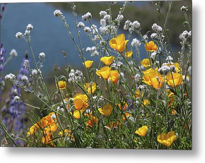Metal Print featuring the photograph Wildflower Super Bloom At Diamond Valley Lake by Cliff Wassmann