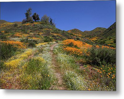 Metal Print featuring the photograph Wildflower Superbloom by Cliff Wassmann