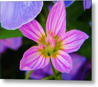 Metal Print featuring the photograph Wildflower by Susan Carella