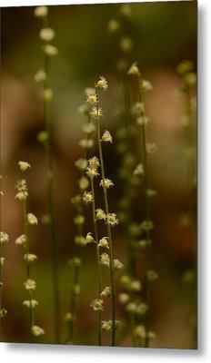 Wildflowers 1 Metal Print by Maria Suhr