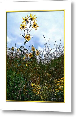 Metal Print featuring the photograph Wildflowers And Mentor Marsh by Joan  Minchak