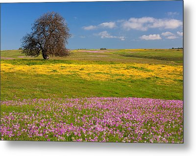 Metal Print featuring the photograph Wildflowers And Oak Tree - Spring In Central California by Ram Vasudev