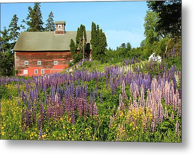 Metal Print featuring the photograph Wildflowers And Red Barn by Roupen  Baker