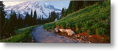 Wildflowers At Sunset, Mount Rainier Metal Print by Panoramic Images