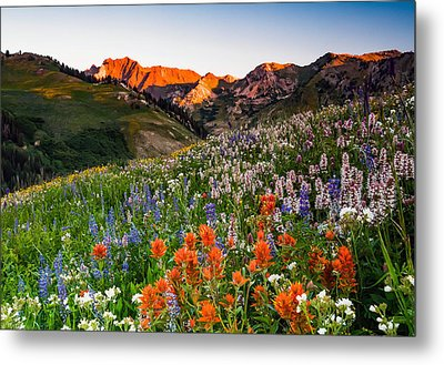 Wildflowers In Albion Basin. Metal Print by Johnny Adolphson