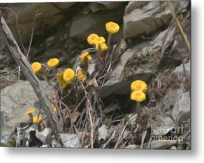 Metal Print featuring the painting Wildflowers In Rocks by Smilin Eyes  Treasures