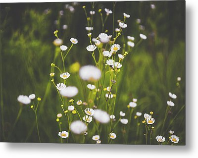 Metal Print featuring the photograph Wildflowers In Summer by Shelby Young