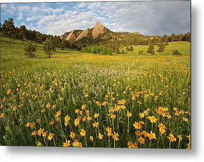 Wildflowers Metal Print by Lightvision