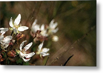 Metal Print featuring the photograph Wildflowers by Marna Edwards Flavell