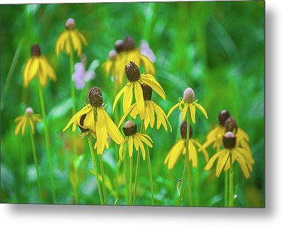 Metal Print featuring the photograph Wildflowers Of Yellow by Bill Pevlor